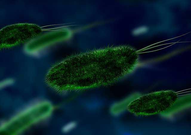 apa itu virus corona